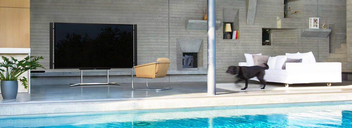 4k tv pool dog
